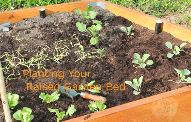 Planting Your Raised Garden Bed - Square Foot Gardening Plan A Pinch of Joy
