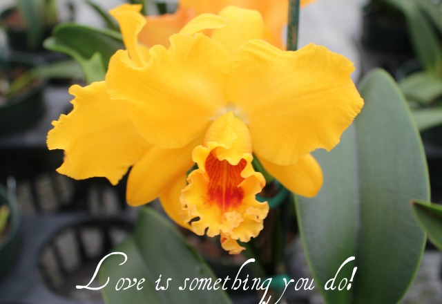 Love is something you do –
