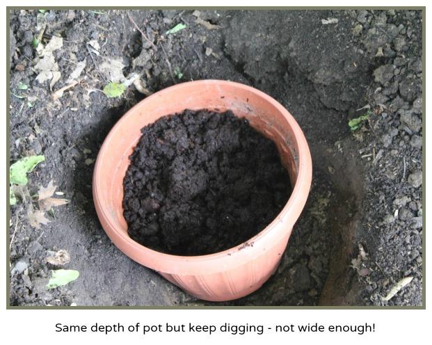 Hydrangea depth