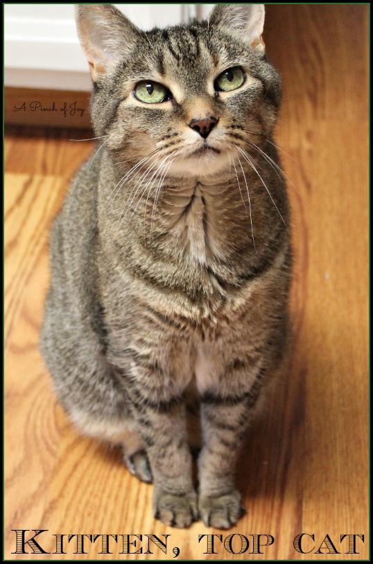 A Pinch of Joy Meet Kitten, Top Cat
