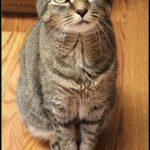 Kitten Top Cat A Pinch of Joy
