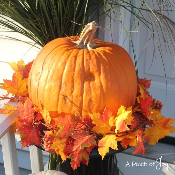 cSunlit Pumpkin
