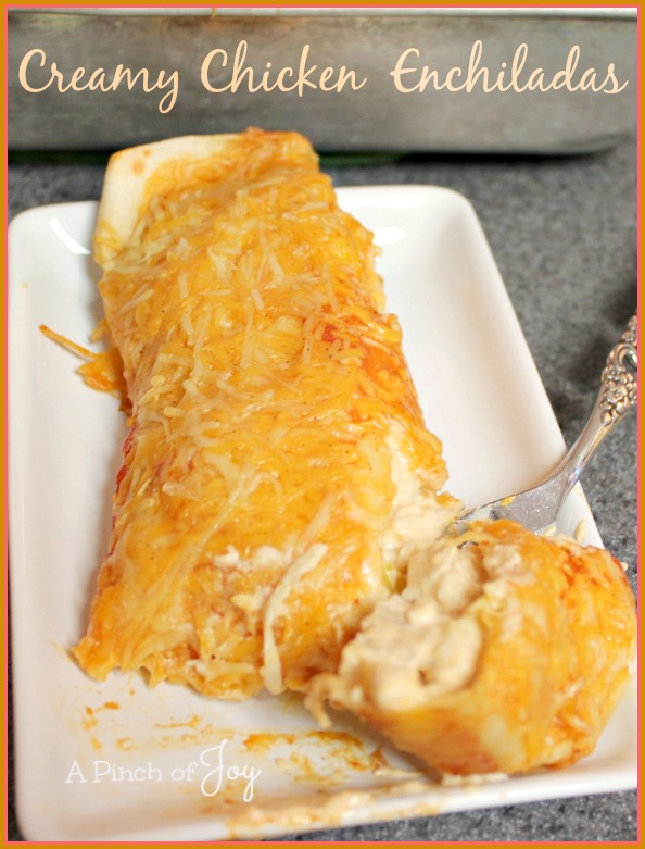 Creamy Chicken Enchiladas -- A Pinch of Joy