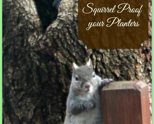 How to Squirrel Proof Your Planters