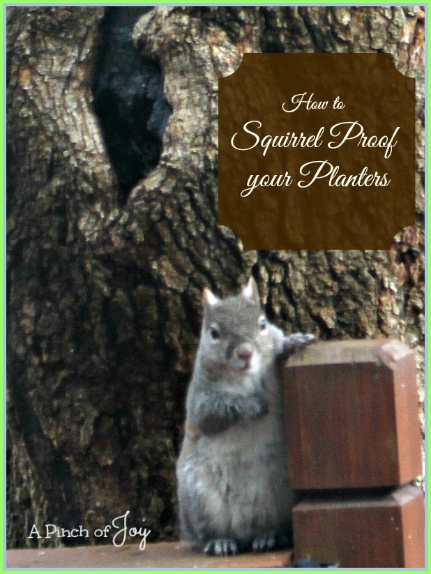 How to Squirrel Proof Your Planters -- A Pinch of Joy