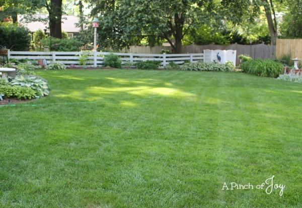 2Back yard West -- A Pinch of Joy