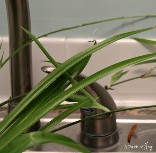 Laundry Room Backsplash - A Pinch of Joy