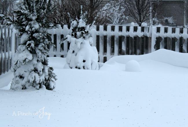 Snowstorm 2016 -- A Pinch of Joy
