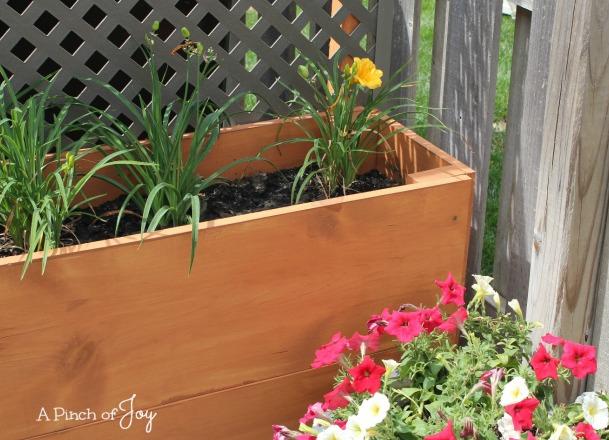 7 Planter -- A Pinch of Joy