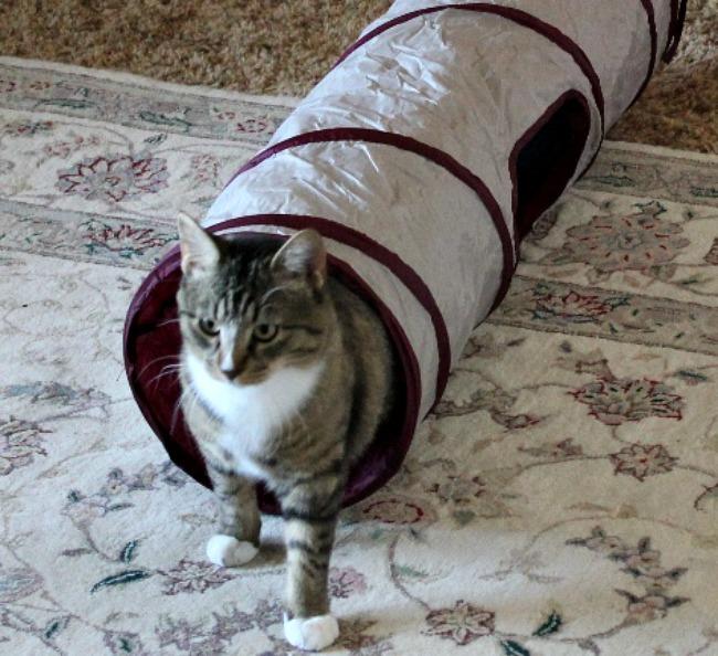 Rocky Cat